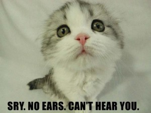 cute-lolcat-ears-hear-you
